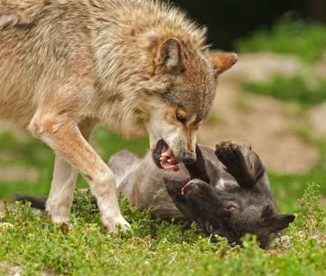 nature-animal-playing-wilderness.jpg