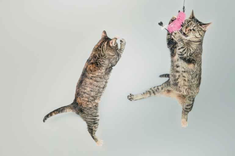 jumping cute playing animals