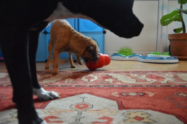 Nia and Lily playing with KONG
