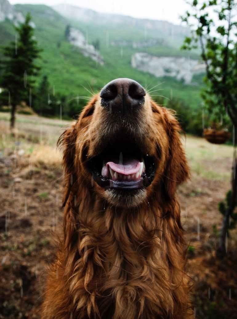 macro photography of brown dog