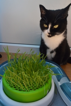 Pooss and her grass