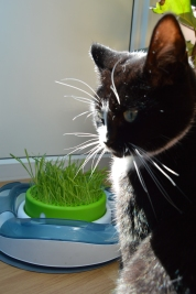 Pooss and her grass..