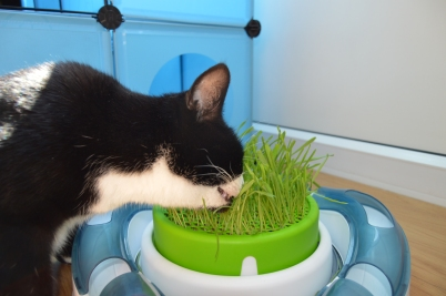 Pooss eating grass two