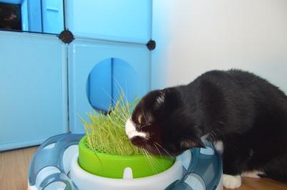 Pooss eating grass