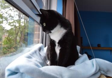 Pooss, watching the birds