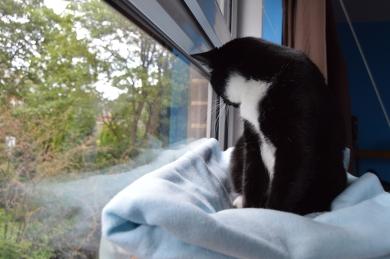 Pooss, watching the birds,2