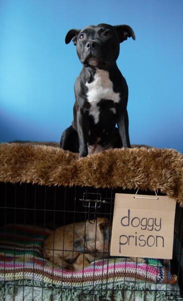 Doggie Prison