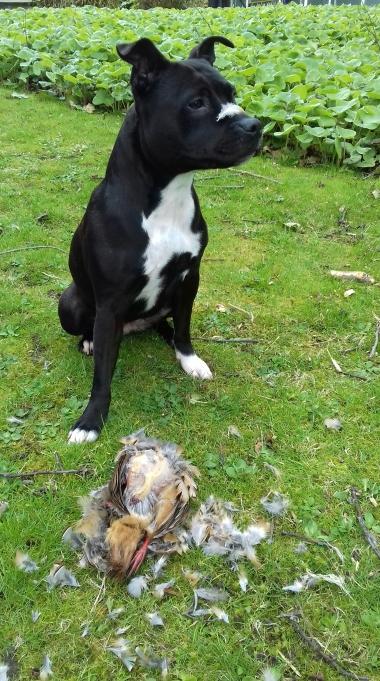 Nia and her pheasant