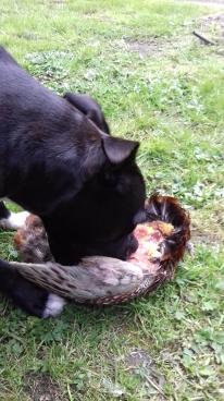 Nia eating.