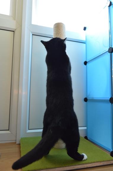 Pooss scratching her cat scratcher
