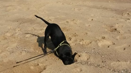 Baby Nia Digging