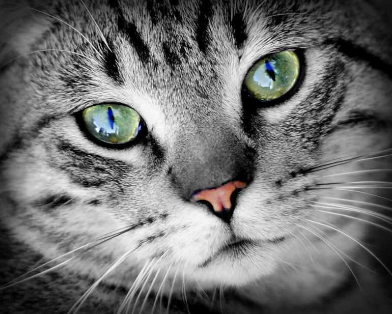 animal portrait cat animal portrait