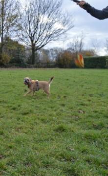 Lily runnng after the flirt pole