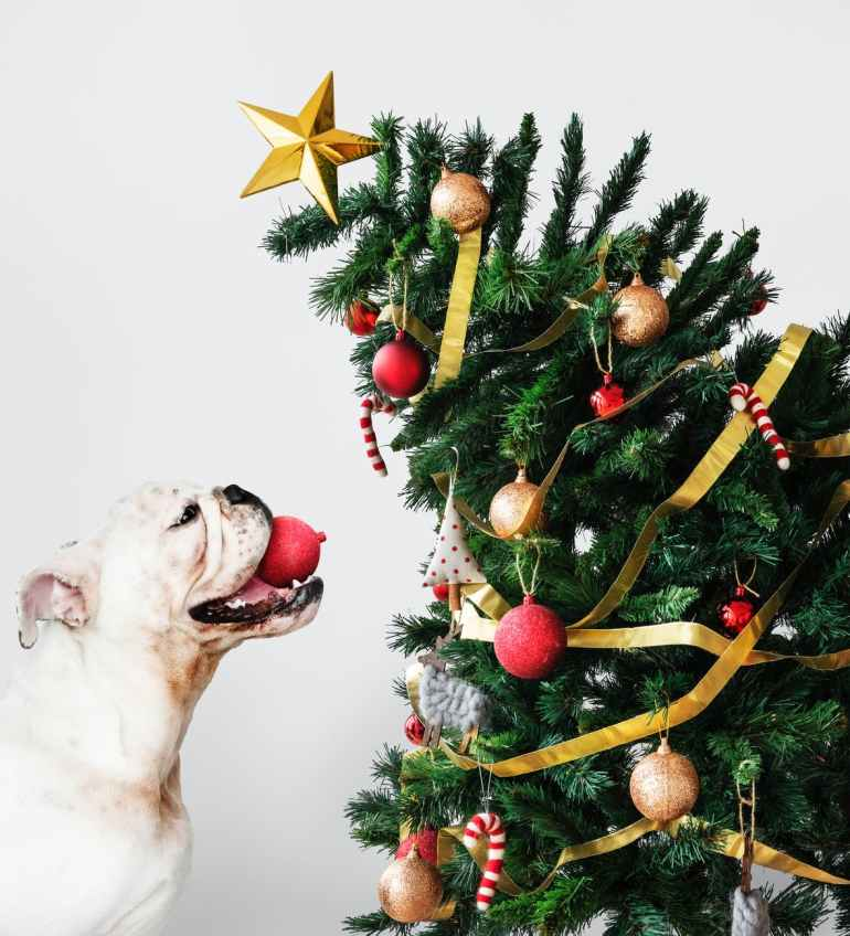animal bulldog candy cane christmas balls